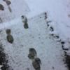 米国優先株ETF(PFF)から分配金.大雪の中,今年初めて雪だるまが転がりました.