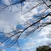 時の流れ 桜