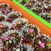 簡単で数がつくれる、ちびっ子との手作りバレンタインチョコレートのオススメレシピ♪