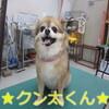 名前入りトリミング犬ご紹介 20フォト