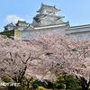 姫路城のさくら風景別角度から
