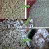 爺飯48 市販 「玄米」をテストした