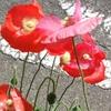かわいい💖お花たち(*ˊ˘ˋ*)。♪:*°