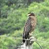 台湾でバードウォッチング2…台北野鳥の会