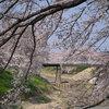 奈良、曽我川沿いの桜を α7IIIとSAL70300G 編