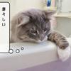 猫雑記 ~お風呂巡回の再開~