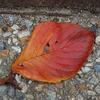 わが家に迷い込んだ落ち葉