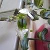 20.04.14(火)  花の写真