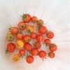 雨続きの為、プチトマトが割れてしまいます(T_T)