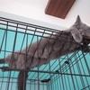 猫の網焼きはじめました!〜猫の日常〜