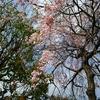 開成駅前の桜やハナミズキが見頃&根府川のみのやさんでランチパーティー