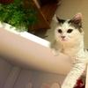 猫も自身で暑さ調整⁈