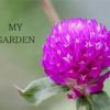 家の庭を探検!季節の植物~緑の中にアクセントの紫~