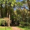 児玉美術館 芸術の薫りと四季の自然が楽しめる、緑に包まれた美術館  -竹林が美しい-