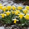 四月の雪、春の雪