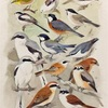 People of birds    鳥の人