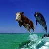 海豚(小型鯨類)の飼育論争は得か損か? 捕鯨への極めて悪質な叩き映画への反論は得か損か? 水族館飼育や捕獲を肯定する理屈は有るのか?/和歌山県の太地沖で今季7日目の漁の成功\(^o^)/