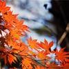 本日は立秋。暦では秋のはじまり。今するべきケア!