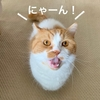 【猫学】猫同士のコミュニケーション術を知って、愛猫ともっと仲良くなりたい!