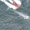 A blue whale's heartbeat has been recorded for the first time - and the results are fascinating