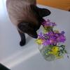 Bouquet  夫が摘んできてくれた花