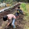秋のサツマイモ掘り。子どもたちと収穫の恒例行事。