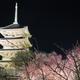 東寺のライトアップに参りました