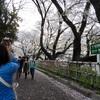 夜桜見物🌸 in名古屋城🏯