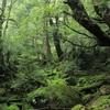 【2日目】神秘的な世界。ついに、1泊2日の屋久島、縄文杉トレッキングへ。ガイドさん情報も!
