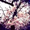 Spring…*