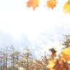Snapshot  ~『秋の朝』