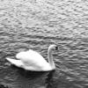【山梨行ってきました!】 湖の餌やりが社会の縮図だった件