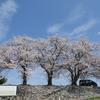 手取川「三本桜」(前編)