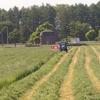 牧草の収穫から考える:人の意見に流されることのメリット