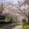 桜-第6号 山陰への旅路