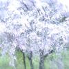 「桜の咲く頃にはいつも思いだす…」episode-13