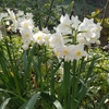 「季節の移り変わり」の話