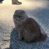 高野山のネコ