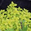 黄色植物が綺麗!