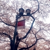3/29(日)時短営業のご案内 ミオンパシー整体院UROOM国立立川