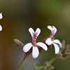 花盛りのベランダ2020 (1)