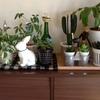 スピンオフ*観葉植物ビフォーアフター