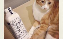 ネコ英語「意外と飼い主のことを観察してる」