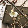 今日の景色 02/11 花々と猫