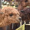 【海外の動物園】動物との距離が近い大型動物園「Batu Secret Zoo」!
