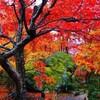 京都の紅葉 混雑回避テクニック2019 7つの攻略法をご紹介!!