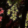 🍂小石川後楽園の紅葉🍁
