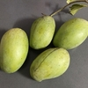 硬いマンゴーを頂きました。未熟と完熟の両方の楽しみ方。