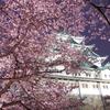 久々に名古屋城に行きました!