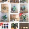 セメント植物やっと出品